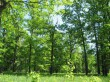 04.01.2013. Лиственные леса, леса, состоящие из деревьев и кустарников...